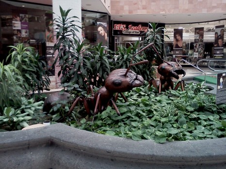 Ants in Sunland Park Mall, El Paso