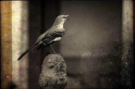 © Carol Von Canon with CCLicense