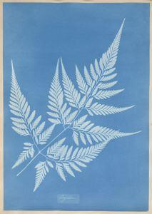 Anna_Atkins_(1799-1871)_Ceylon,1850_SFMOMA