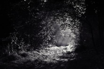 woods-690415_640