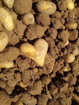 potato-540386_640