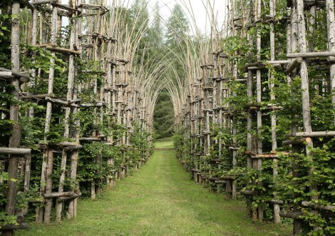 tree-cathedral-cattedrale-vegetale-giuliano-mauri-1
