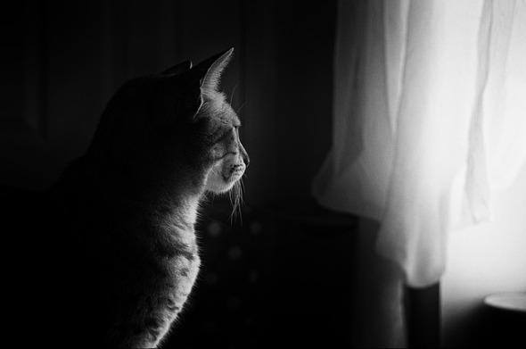 cat-659426_640