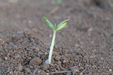 plant-259806_640