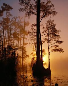 Okefenokee Swamp Public Domain Image via Pixabay