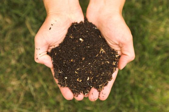 real_compost.jpg