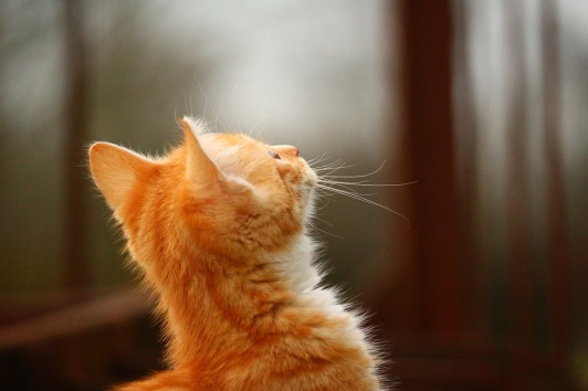 cat-1101110_960_720.jpg
