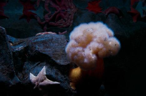 starfish-275563_960_720