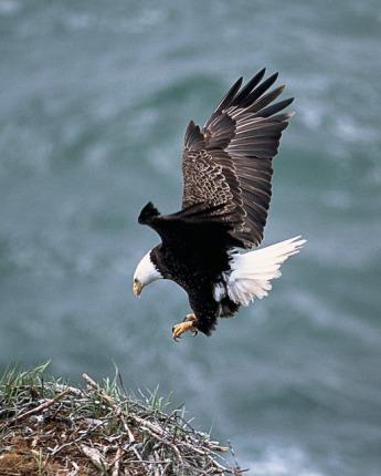 eagles-nest-142700_640