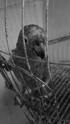 parrot-773911_640