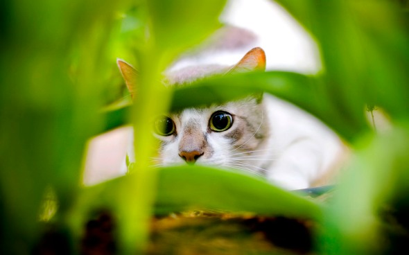 cat-peering-through-leaves