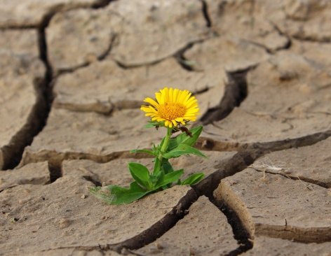flower-1445316715pV2-1.jpg