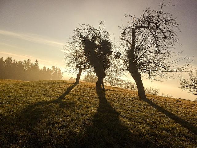 winter-1127609_640.jpg