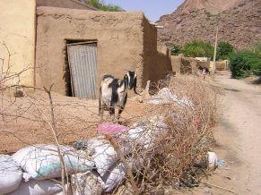 Goat pen in Toteil near Kassala, Sudan