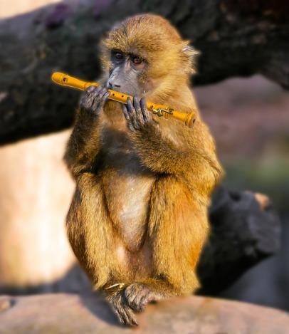 Flute-Monkey-Animal-Musician-Baboon-Barbary-Ape-2150023.jpg