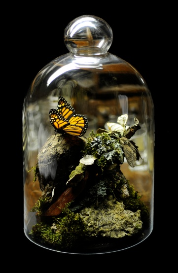 Monarch_Butterfly_Taxidermy_03.jpg