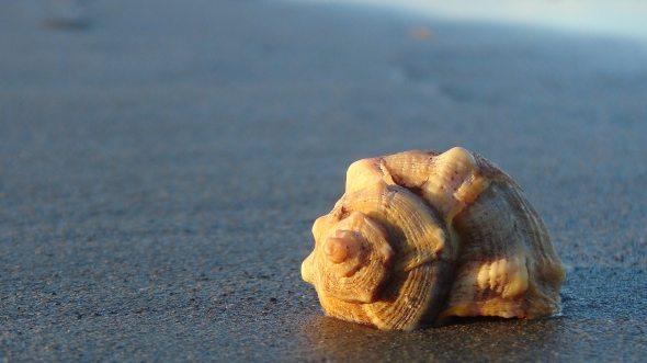 beach-sand-sea-274008