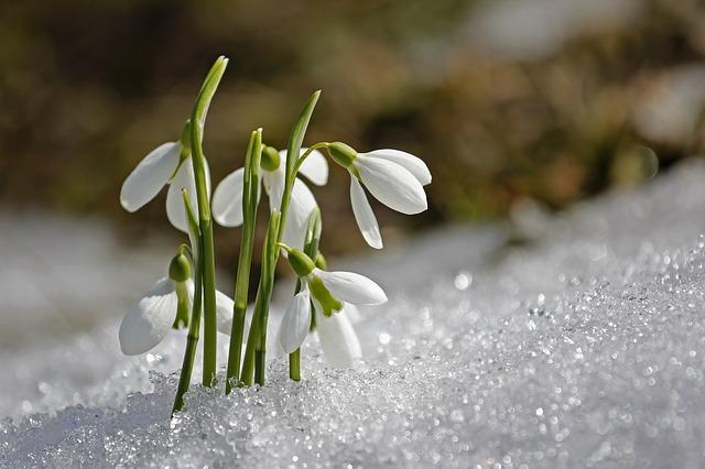 spring-1166564_640