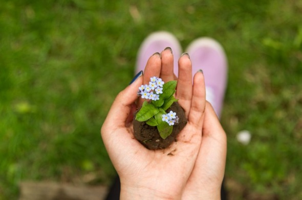 Ground Green Blur Plant Planting Grass Flower