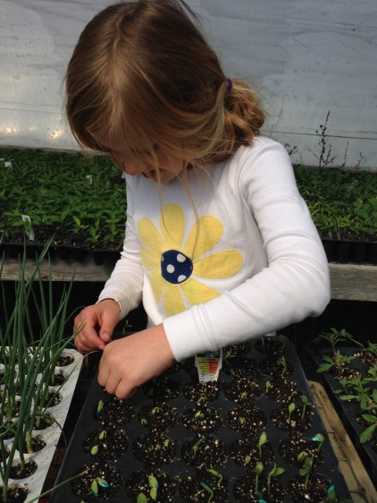 child_planting_seeds_starting_plants_greenhouse_plant_propagation-646671