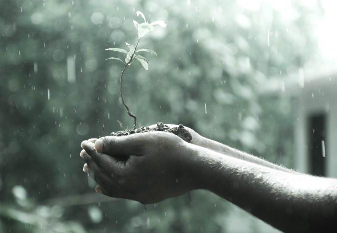 hands_macro_outdoors_plant_rain_soil_water_wet-964378