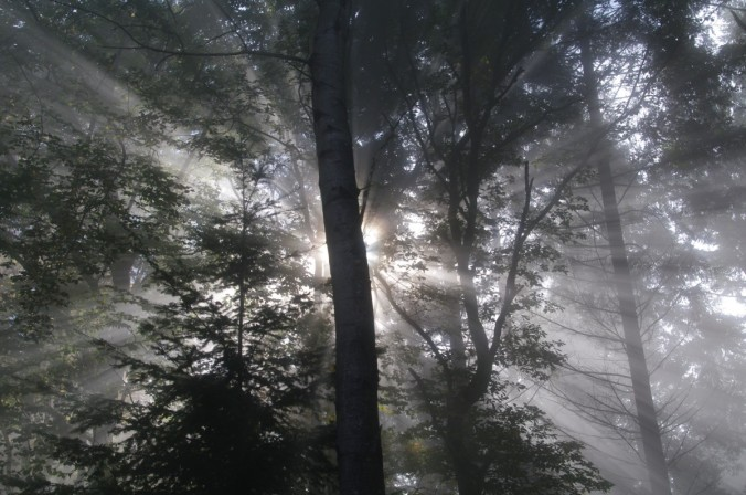 woods_fog_forest_light_scenery_mysterious_mist_landscape-1372037