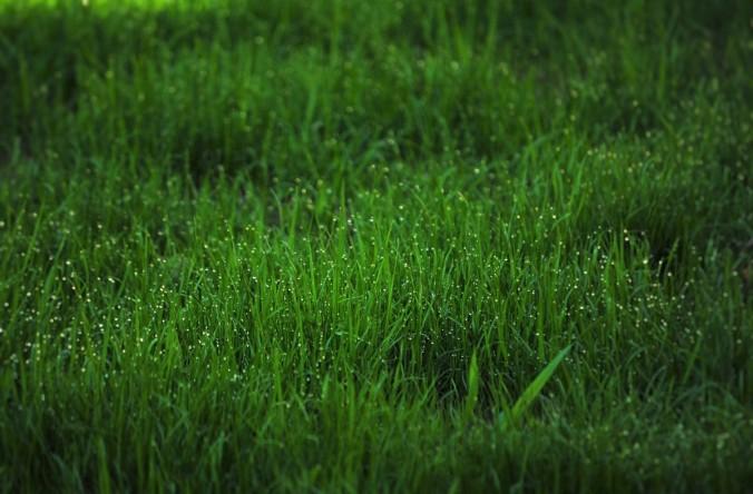 grass_dew_fresh_garden_green_nature_water_morning-593691