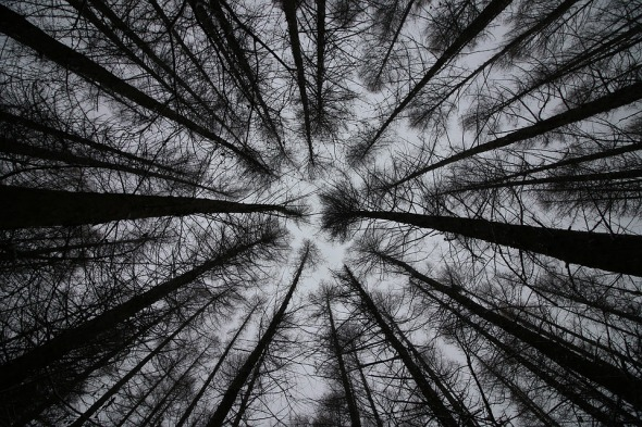 Rural Scenery Nature Look Up Leaf Trees Sky