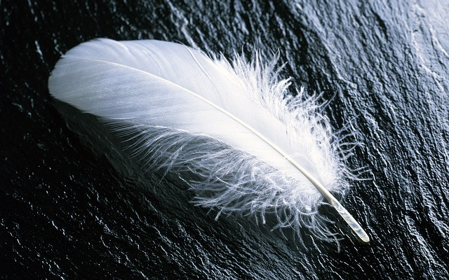 feather-967367_640