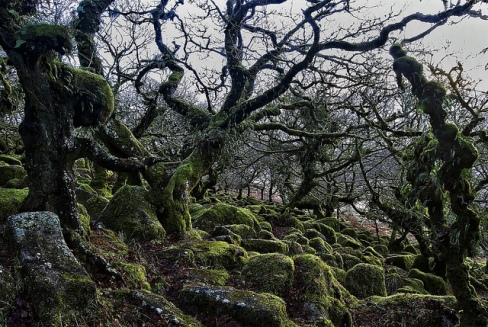 Wistman's Wood, Dartmoor, England © mattharvey1 with CCLicense